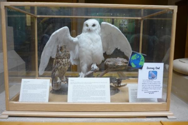Homely Habits: Snowy Owl trail