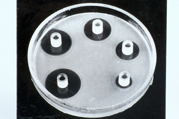 25280 Photograph of cylinder plate assay of penicillin 1800x840 px