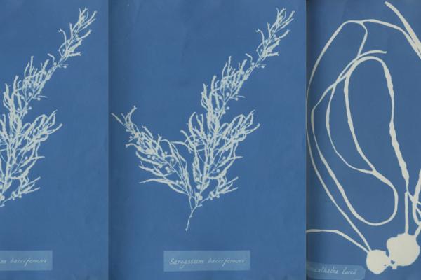 Photo Oxford Anna Atkins algae images 1800 x 840 px