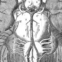 image from Revealing the Brain exhibition, being a cutout from Anatomy of the brain, Thomas Willis, 1664